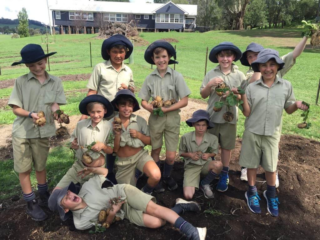 Back to the basics at Tudor House - students harvesting potatoes